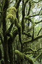 Laurel Forest on Gomera Stock Photos