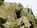 Laurel leaves close up photo of used as condiment in food Royalty Free Stock Photo