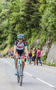 Laurent didier climbing alpe d huez france july the luxembourgish cyclist from radioshack leopard team the difficult road to Stock Photography