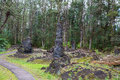 Lava forest hawaii tree state monument is a public park preserves molds of the tree trunks that were formed when a flow swept Royalty Free Stock Photos