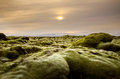 Lava moss volcanic mossy landscape of Iceland at sunrise time Royalty Free Stock Photo