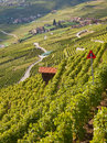 Lavaux region Stock Photo