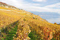 Lavaux region switzerland vineyards in Stock Photo