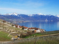 Lavaux in spring terraced vineyards of by rivaz with view towards montreux Royalty Free Stock Photos