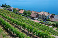 Lavaux Vineyard Terraces Royalty Free Stock Image