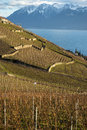 Lavaux, Vineyard Terraces, Switzerland Stock Photos