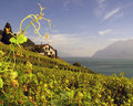 Lavaux Vineyards 4 Switzerland Stock Photography