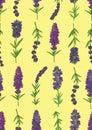 Lavender Zdjęcie Royalty Free