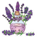 Lavender Obrazy Stock