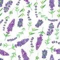 Lavender Zdjęcia Royalty Free