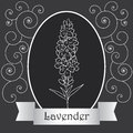 Lavender Fotografia Royalty Free