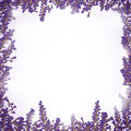 Lavender background illustration of a Stock Image
