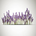 Lavender background illustration of a Stock Photo
