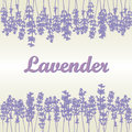 Lavender background product labels business or invitation card flyer design packaging design vector illustration Stock Images