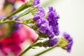 Lavender blossoms Royalty Free Stock Photo