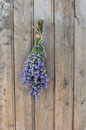 Lavender a bouquet of hanging on an old wooden door Royalty Free Stock Photos