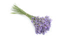 Lavender bunch of flowers isolated on white Royalty Free Stock Image