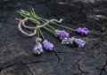 Lavender bunch Royalty Free Stock Photo