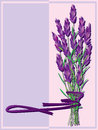 Lavender Bunch_eps Royalty Free Stock Photo