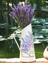 Lavender bunch of in a water pitcher Royalty Free Stock Photo