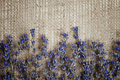 Lavender on burlap background Royalty Free Stock Images