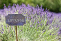 Lavender cartel of italian country Royalty Free Stock Image