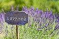 Lavender cartel of italian country Stock Photos