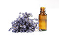 Lavender and essential oil on white background Royalty Free Stock Photo
