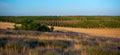 Lavender field beautiful in sevastopol crimea Stock Photos