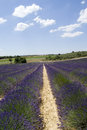 Lavender field in valensole the famous fields the plateau provence france Stock Photography