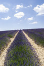 Lavender field in valensole the famous fields the plateau provence france Stock Photo