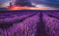 Lavender fields. Magnificent image of lavender field. Summer sunset landscape, contrasting colors. Dark clouds, dramatic sunset Royalty Free Stock Photo