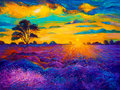 Lavender fields original oil painting of on canvas rich golden sunset landscape modern impressionism Royalty Free Stock Photography