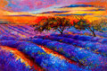 Lavender fields original oil painting of on canvas sunset landscape modern impressionism Royalty Free Stock Images