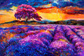 Lavender fields original oil painting of on canvas sunset landscape modern impressionism Royalty Free Stock Photo