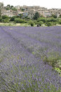 Lavender fields provence rural village france Royalty Free Stock Photo