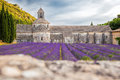 Lavender fields with Senanque monastery in Provence, Gordes, France Royalty Free Stock Photo