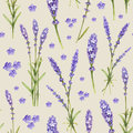 Lavender Flower Illustrations