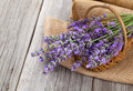 Lavender flowers in a basket with burlap Royalty Free Stock Photo