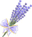 Lavender flowers beautiful bouquet with bow Stock Photo