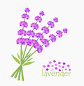 Lavender flowers bouquet card concept vector illustration Stock Photography
