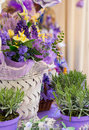 Lavender flowers close up of in the fiorist shop Royalty Free Stock Image