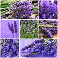 Lavender flowers collage a with different picture of Stock Photography