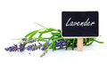 Lavender flowers with letter plate Stock Photos