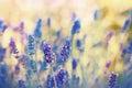 Lavender Flowers In My Flower ...