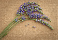 Lavender flowers over sackcloth background Royalty Free Stock Photography