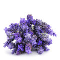 Lavender flowers a pile of on a white background Stock Image