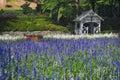 Lavender Flowers At Wellington...