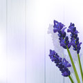 Lavender flowers on wood against a panel background Royalty Free Stock Images