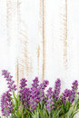Lavender flowers on a wooden background Royalty Free Stock Photos